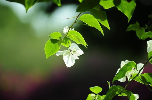 lovely-nature-libre-de-droits
