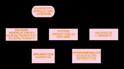 Blank Diagram (3)